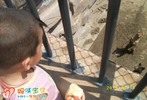 哈尔滨北方森林动物园位于黑龙江省哈尔滨市阿城 高清图片